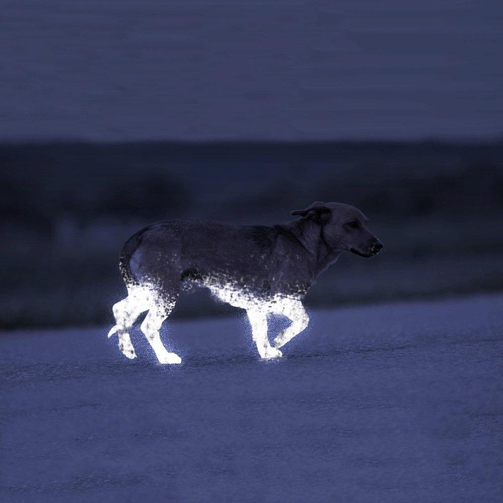 Albedo 100 es el spray reflectante para perros y mascotas