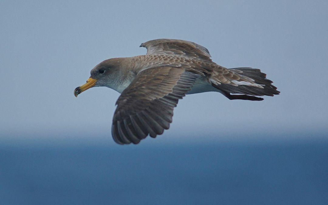 """""""Balizas Salvapájaros luminiscentes"""" para proteger a las aves en las Islas Canarias"""